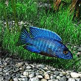 Скриншот к игре Аквамир - 3D аквариум